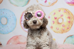 donutgrowup-luckylolastudios-allpawsretreat-190103-001-9